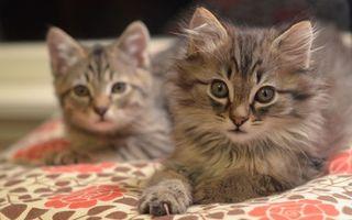 Фото бесплатно котята, морды, уши
