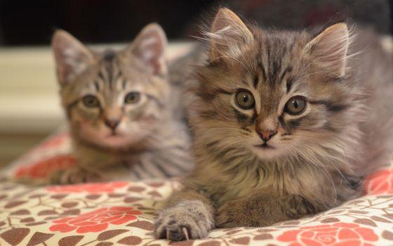 Заставки котята, морды, уши