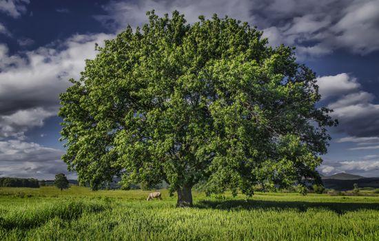 Beautiful wallpaper field, tree on the phone