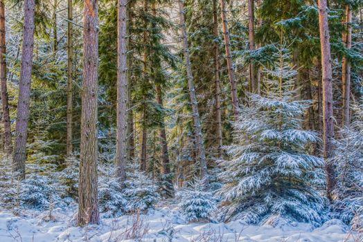 Бесплатные фото зима,лес,деревья,ели,пейзаж
