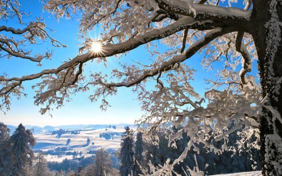 Бесплатные фото зима,сугробы,дерево,ветви,снег,солнце,елки