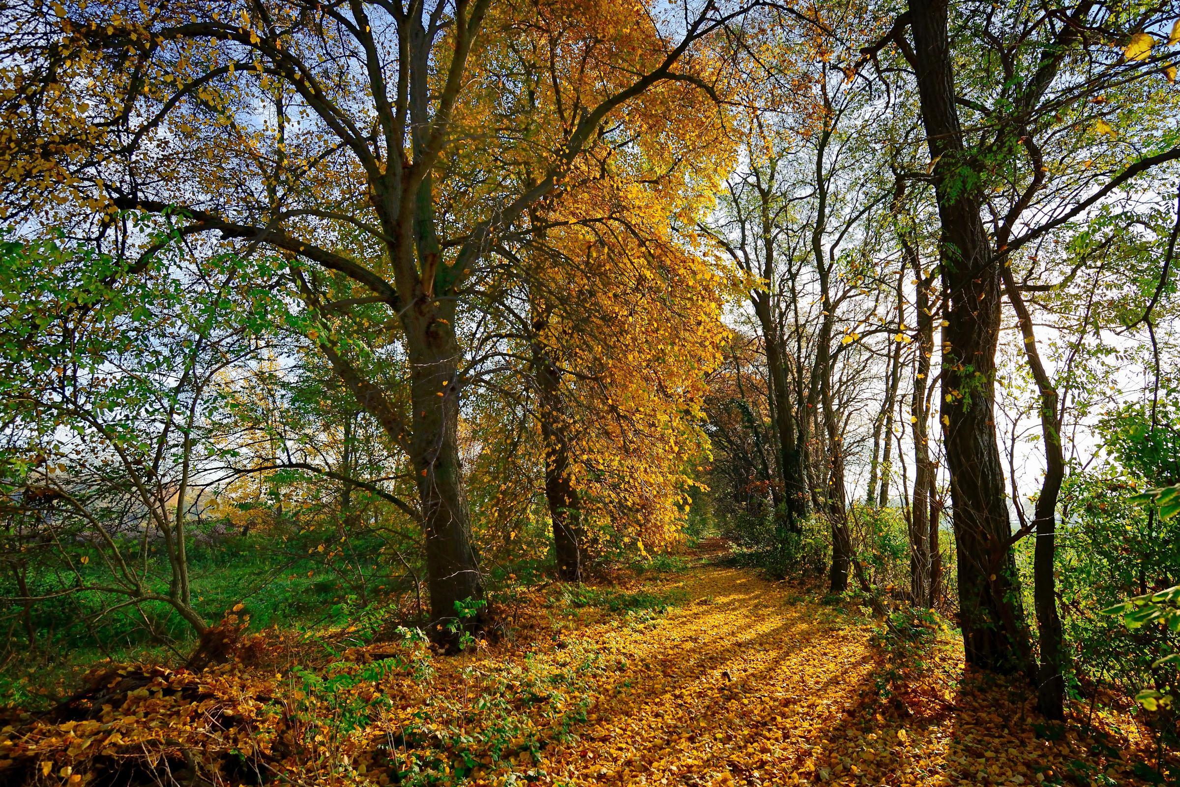 обои осень, лес, деревья, природа картинки фото