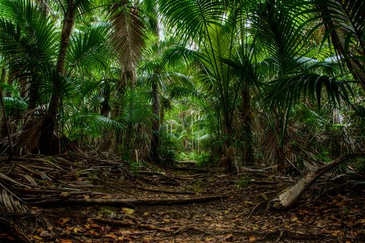 Заставки Австралия, деревья, остров Лорд-Хау