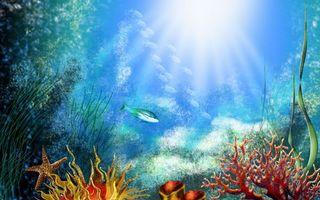 Фото бесплатно дно, кораллы, водоросли, рыбки, морская звезда, солнце