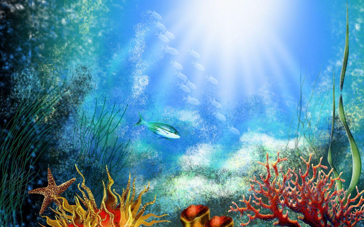 Фото бесплатно дно, кораллы, водоросли, рыбки, морская звезда, солнце, подводный мир