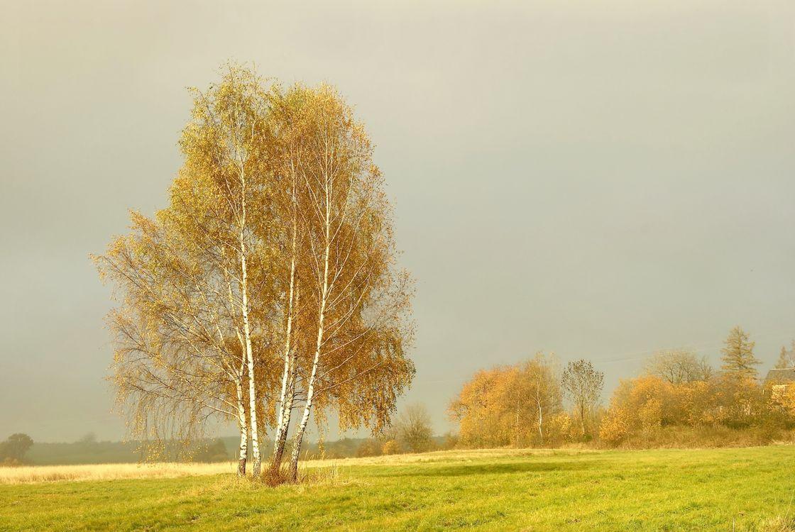 Фото бесплатно поле, осень, деревья, туман, пейзаж, пейзажи