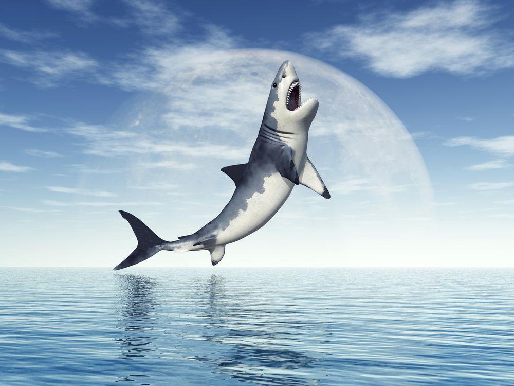Фото бесплатно акула, хищник, оскал - на рабочий стол