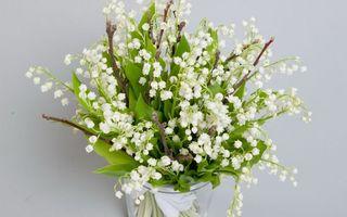 Бесплатные фото ландыши,белые,листья,зеленые,веточки,ваза