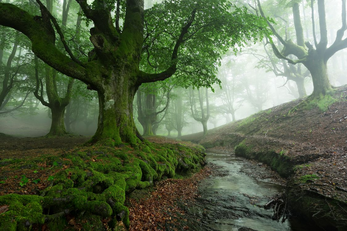 Фото бесплатно ручей, лес, туман - на рабочий стол