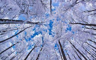 Фото бесплатно зима, лес, деревья, ветви, иней, небо, вид с низу
