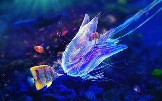 Бесплатные фото медуза,рыбки полосатые,плавники,риф