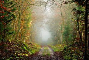 Бесплатные фото осень,лес,дорога,деревья,туман,пейзаж