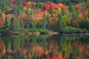 Фото бесплатно озеро, осень, деревья