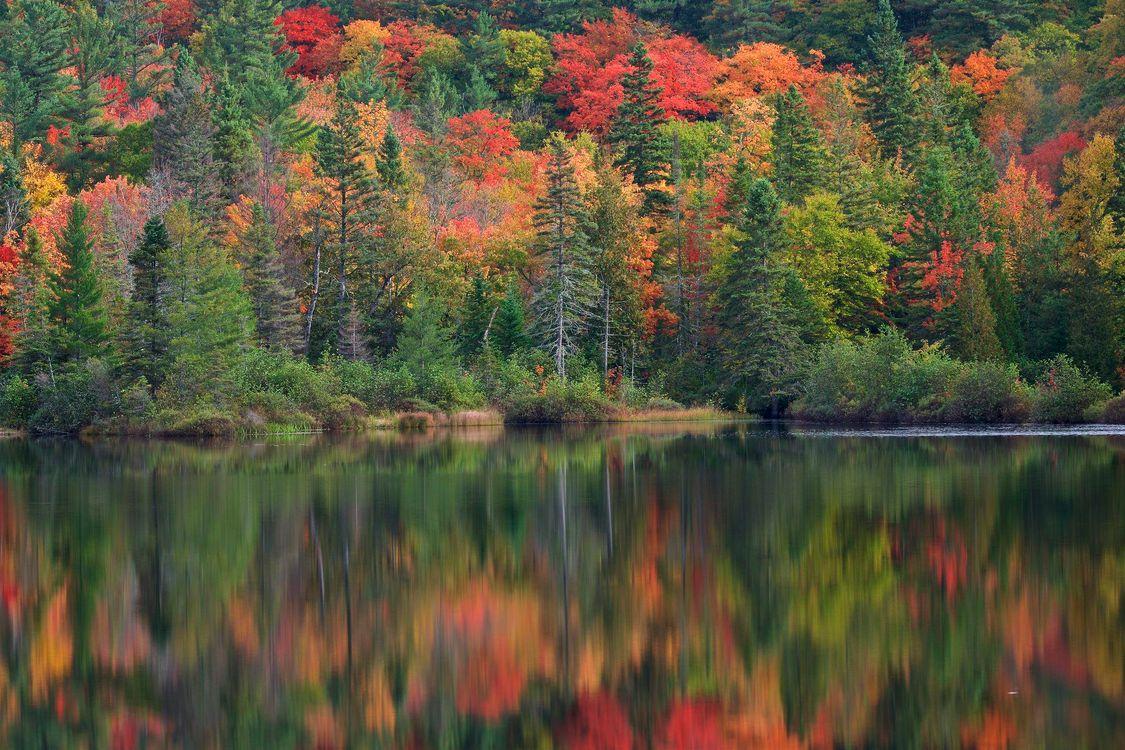 Фото бесплатно озеро, осень, деревья, лес, пейзаж, пейзажи