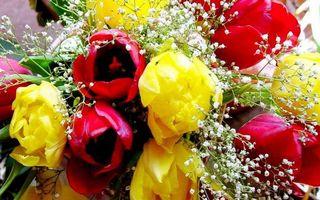Бесплатные фото букет,композиция,тюльпаны,лепестки,гипсофила,листья