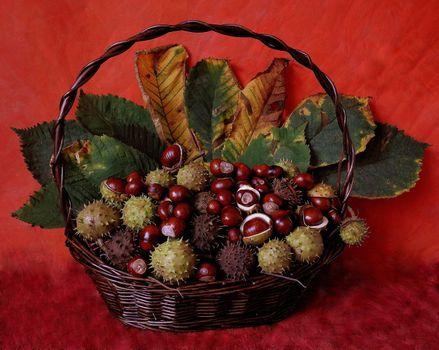 Фото бесплатно корзина, каштан, листья, натюрморт
