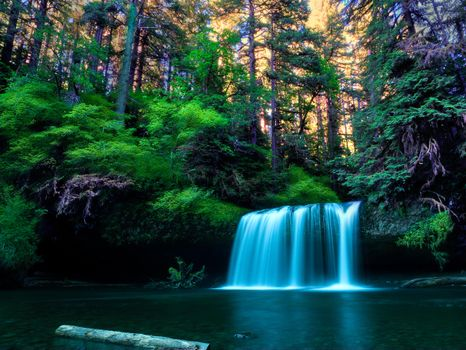 Photo free green foliage, forest, waterfall in the forest
