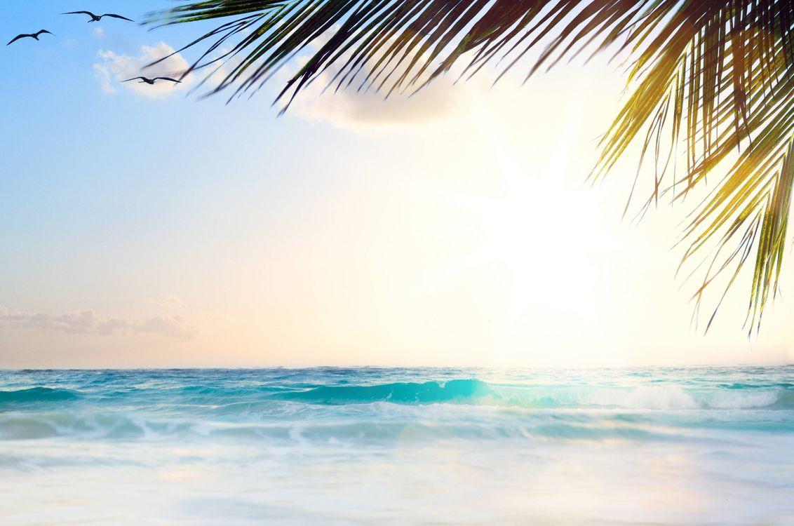 Фото бесплатно океан, пальма, чайки - на рабочий стол