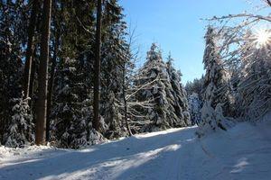 Бесплатные фото зима,лес,дорога,деревья,пейзаж