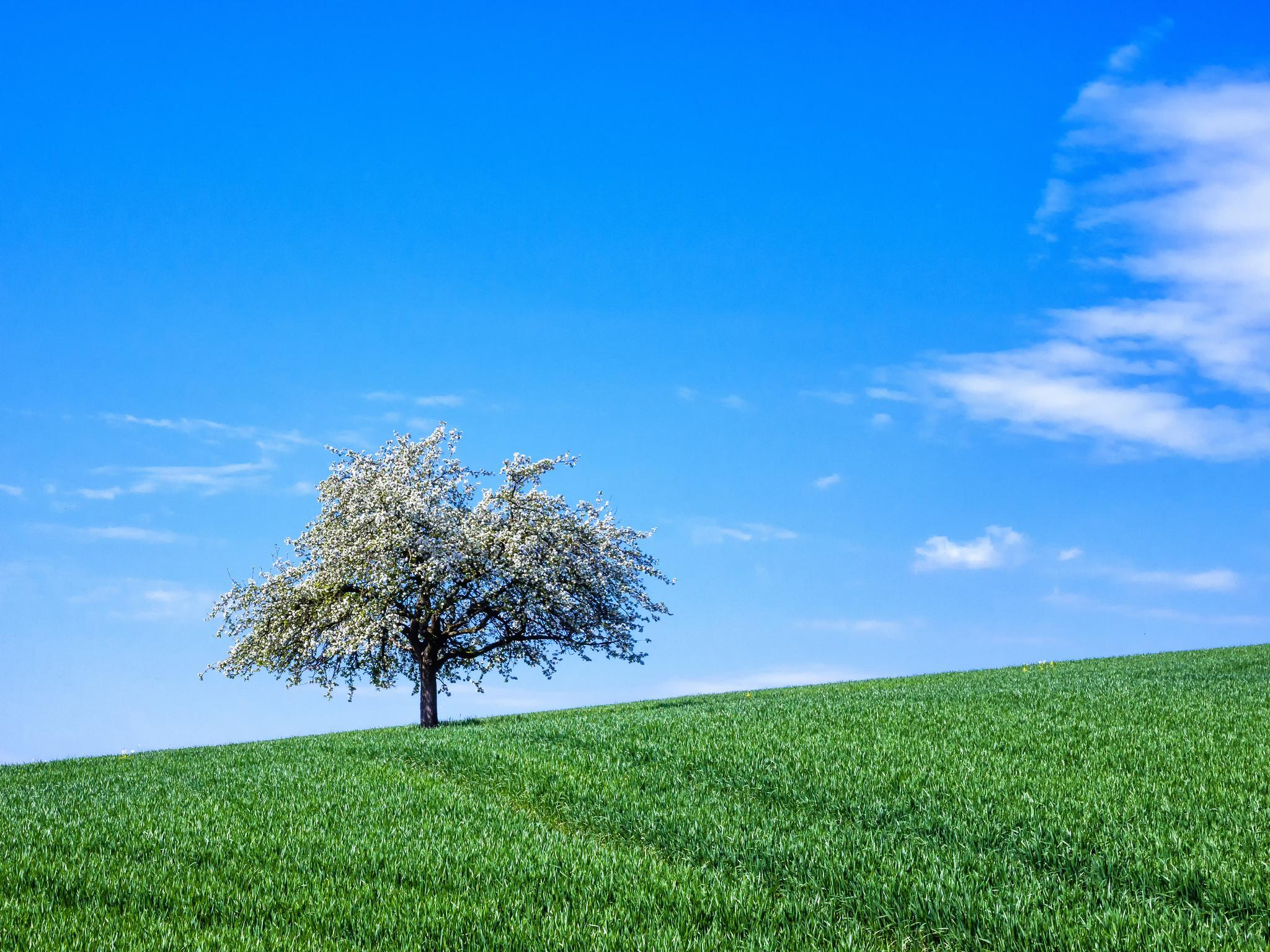 дерево поле  № 439084 без смс