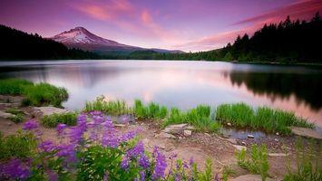 Фото бесплатно берег, трава, цветы, камни, озеро, деревья, гора