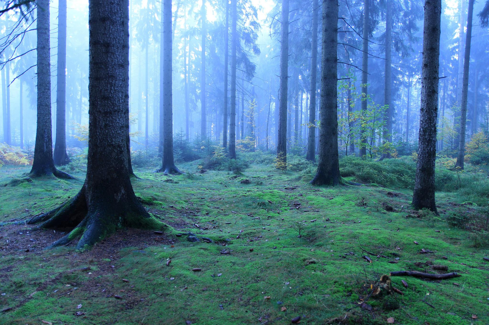 обои лес, деревья, туман, природа картинки фото
