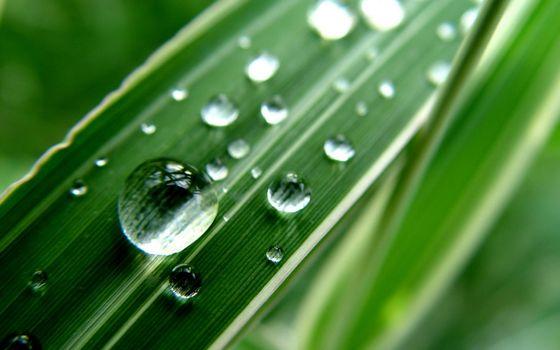 трава, зеленая, листья, прожилки, капли