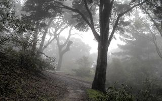 Бесплатные фото горы, тропинка, трава, деревья, кроны, туман