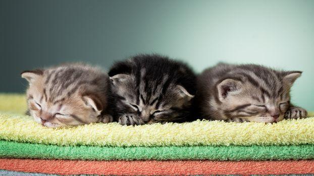 Фото бесплатно котята, маленькие, коврик