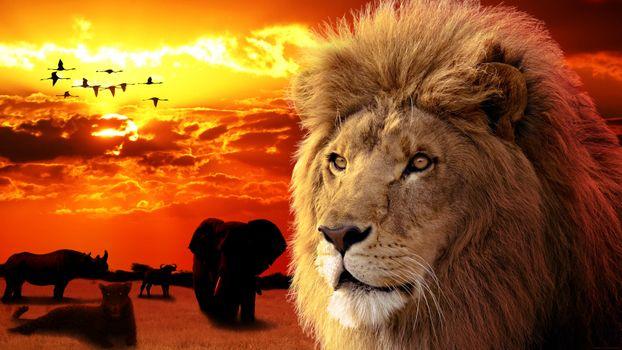 Фото бесплатно зверь, царь зверей, лев