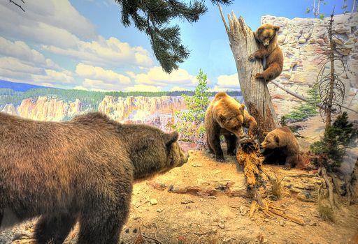 Photo free bears, brown, animals