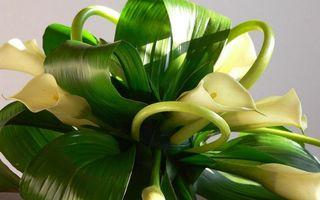 Заставки букет, калы, лепестки, белые, стебли, листья, зеленые