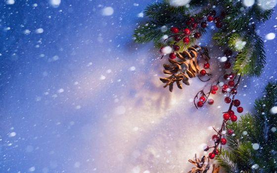 Бесплатные фото Новогодние шишки и ягоды,ёлочные ветки,снег,ягоды