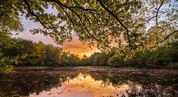 Фото бесплатно закат, озеро, лес, деревья, ветки деревьев, отражение, пейзаж