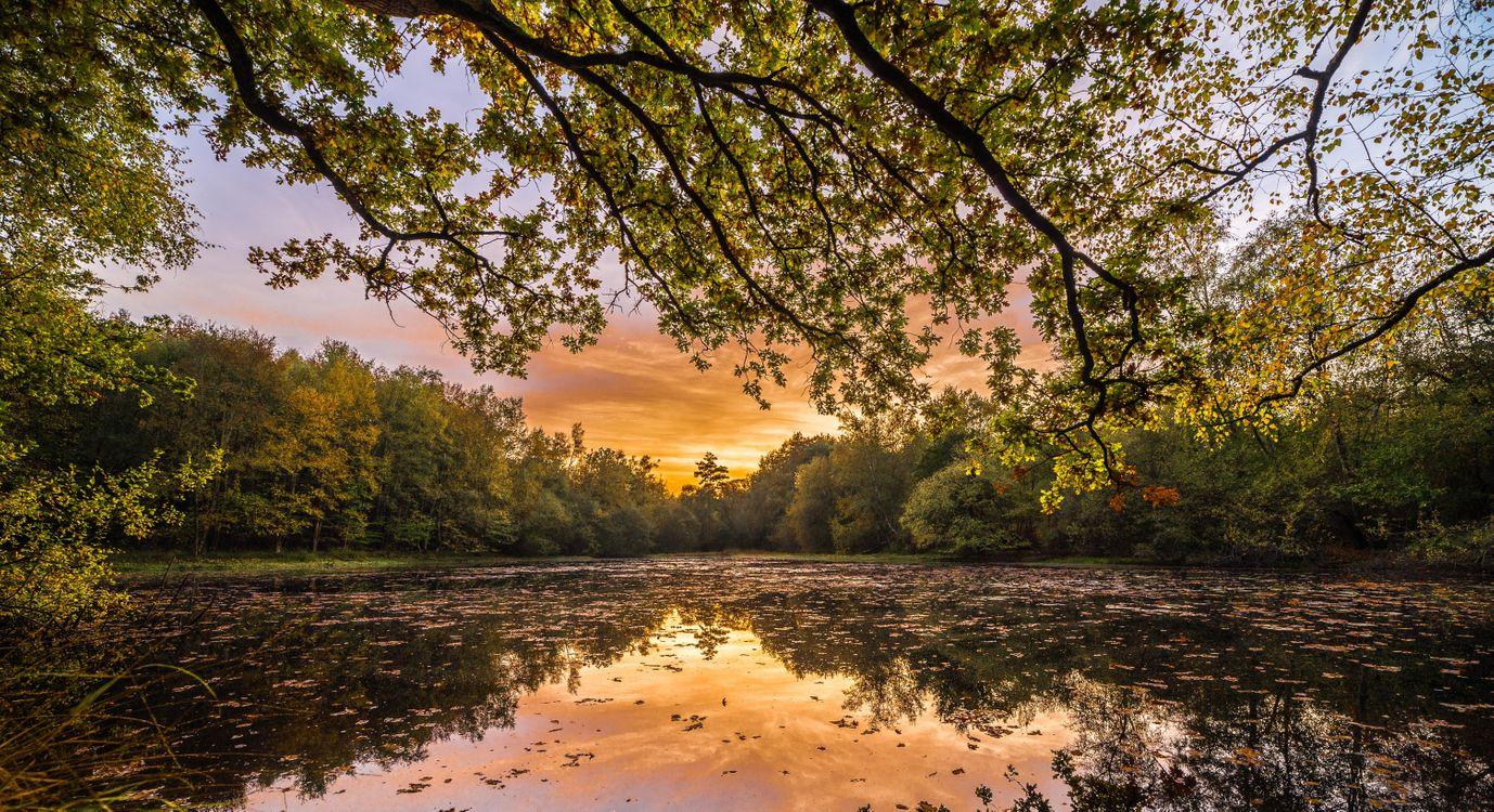 Фото бесплатно закат, озеро, лес, деревья, ветки деревьев, отражение, пейзаж, пейзажи