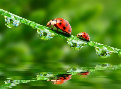 Photo free macro, ladybug, dew