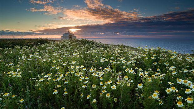 Бесплатные фото Мыс Эшпишел,Португалия,море,берег,цветы,ромашки,закат,пейзаж