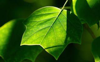 Бесплатные фото ветка,листья,зеленые,прожилки,свет,тень