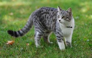 Бесплатные фото кот,пятнистый,парк