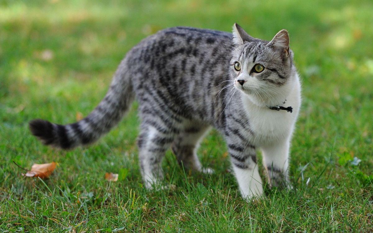 Фото бесплатно кот, пятнистый, парк, кошки