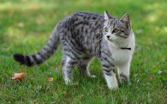 Заставки кот, пятнистый, парк