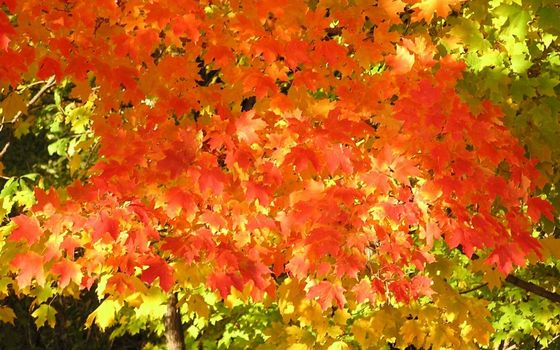 Заставки осень, дерево, ветви