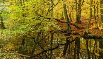 Бесплатные фото осень, лес, деревья, водоём, пейзаж