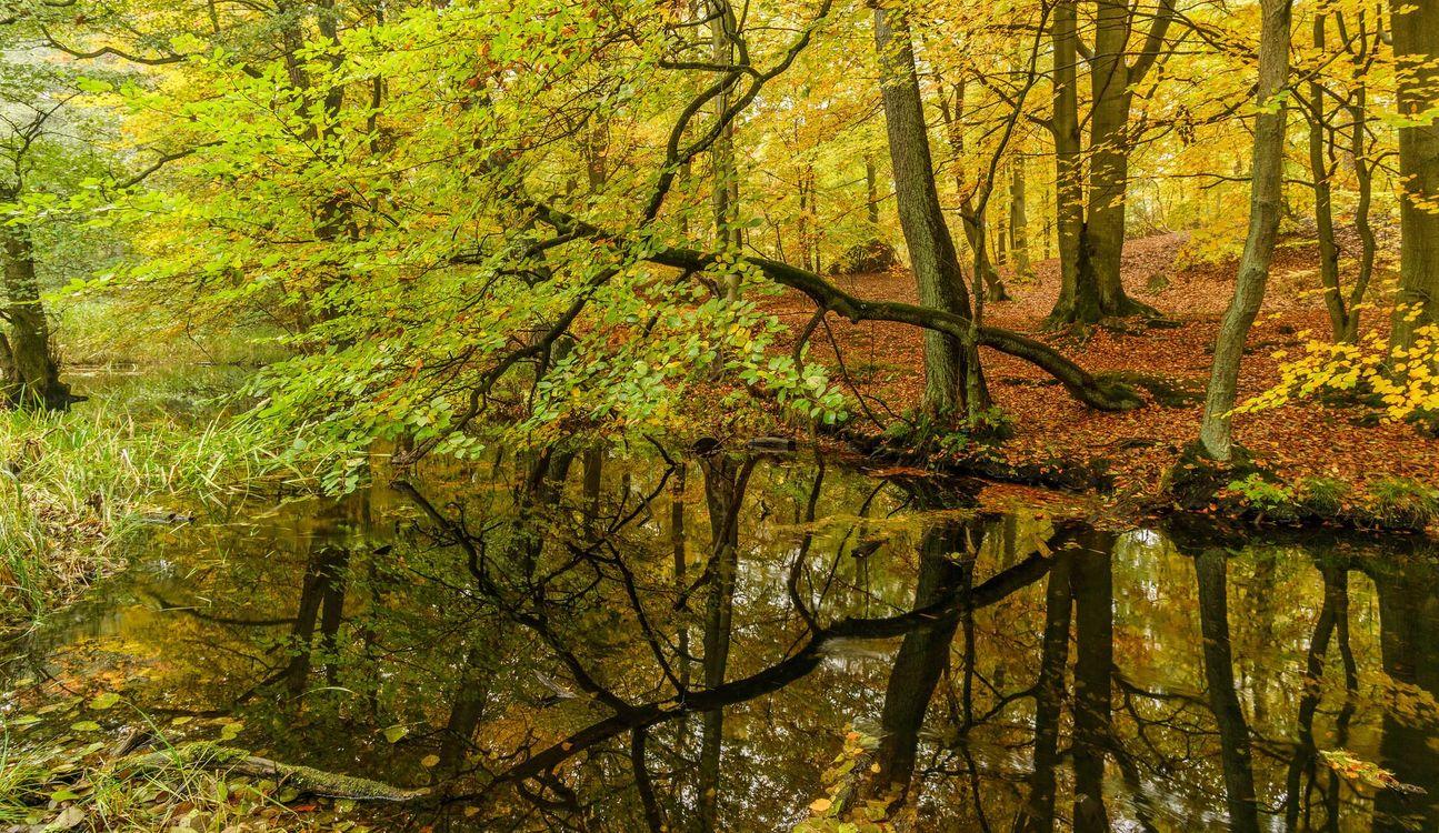 Обои осень, лес, деревья картинки на телефон