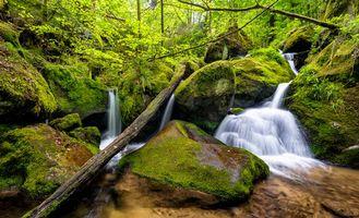 Фото бесплатно Gertelbach, Black Forest, Germany, лес, речка, водопад, природа