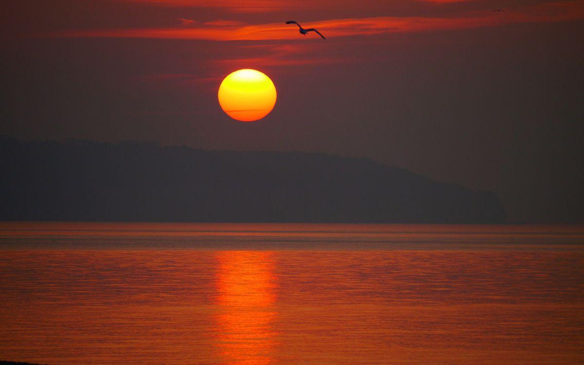 Фото бесплатно закат солнца, море, остров, небо, солнце, отражение, чайка, птица, пейзажи