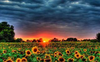 Бесплатные фото поле,подсолнухи,деревья,небо,облака,солнце,закат