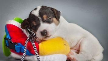 Бесплатные фото щенок,спит,морда,лапы,шерсть,вещи,стопка