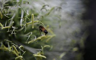 Бесплатные фото трава,зеленая,пчела,полет,крылья,лапы