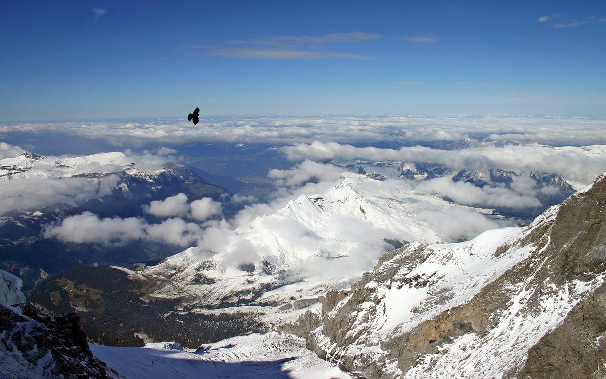 Фото бесплатно птицы, вершины, снег - на рабочий стол